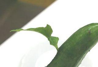 葉っぱ拡大.jpg