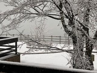 雪 1.jpg
